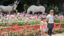 Kunming11