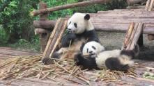 Chengdu4