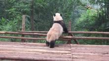 Chengdu5